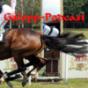 Turfnachrichten Podcast Download