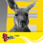 Radio Fritz - Neues vom Känguru Podcast herunterladen