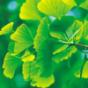 Podcast Download - Folge Gardening online hören