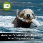 Ankimo's Naturfoto Podcast Podcast Download