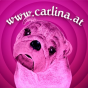Carlina Podcast Download