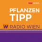 Der Radio Wien Pflanzentipp