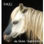 Pferdegeschichten: Pauli das kleine Ungeheuer