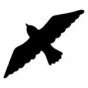 Vogelperspektive Podcast Download