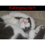 Katergespräch Podcast Download
