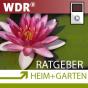 ARD Ratgeber Heim+Garten - zum Mitnehmen Podcast Download