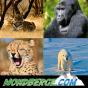 Mondberge Podcast herunterladen
