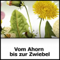 Vom Ahorn bis zur Zwiebel - BR-alpha Podcast Download
