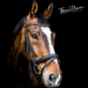 Kreative Pferdefotografie