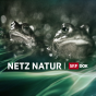 NETZ NATUR HD Podcast Download