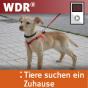 WDR - Tiere suchen ein Zuhause Podcast Download