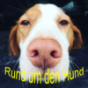 Podcast Download - Folge Rund um den Hund - Podcast 1 online hören