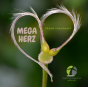 Megaherz Podcast Download
