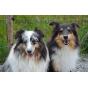 Dreamdoggy-Informationen über Hundehaltung (inspiriert durch Martin Rütter und Cesar Millan) Podcast Download