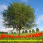 Gesund Essen und Leben - der Podcast mit Gerald Rauch Download