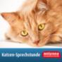 Katzen-Sprechstunde von Antenne Niedersachsen Podcast Download