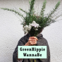 GreenHippie WannaBe Podcast Download