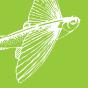 Flugfisch fragt... Podcast Download