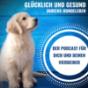 Glücklich und gesund durchs Hundeleben Podcast Download