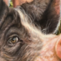 Die Welt von hinter der Fleischtheke Podcast Download