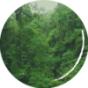 Curare, Kautschuk, Stevia - eine koloniale Spurensuche über das Pflanzensammeln Podcast Download