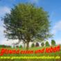 Gesund Essen und Leben - der Podcast mit Gerald Rauch