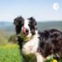 Gesundheit für unsere Hunde
