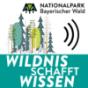 Wildnis schafft Wissen - Forschung im Nationalpark Bayerischer Wald