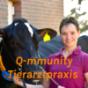 Q-mmunity Tierarztpraxis Podcast Download