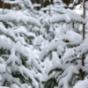 Weihnachtsbaum Podcast Download