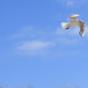 Podcast Download - Folge #6 Der Traum vom Fliegen. Eine Ansprache zur Konfirmation. online hören