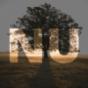 NU Standard Podcast Download