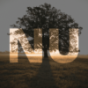 Podcast Download - Folge NU Standard Einleitung online hören