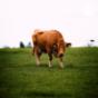 Sollte man sich Vegetarisch ernähren? Podcast Download