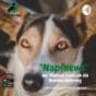 Napfnews, der etwas andere Podcast rund um die Ernährung von Hunden