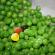Peas in a Pod(cast)