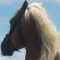 pferdethema - Pferdepod