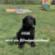 Fibi wird ein Blindenführhund Downlaod