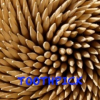 Toothpick Podcast Download