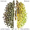 Braincast - Videos zwischen Geist und Gehirn Podcast Download
