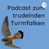 Podcast zum trudelnden Turmfalken