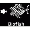 Spielberichte der Fußballmannschaft Roter Stern Biofish Podcast Download