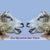 Die Sprache der Tiere Podcast Download