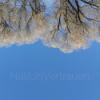 Naturvertrauen Podcast Download
