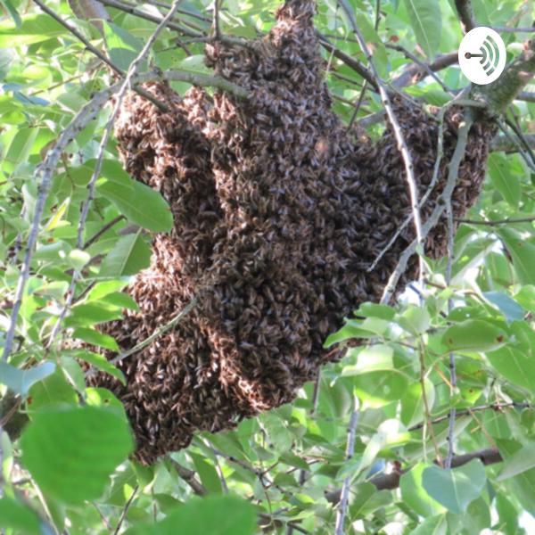 Die BienenArche