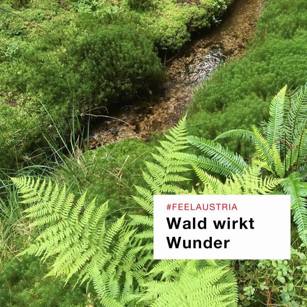 Wald wirkt Wunder