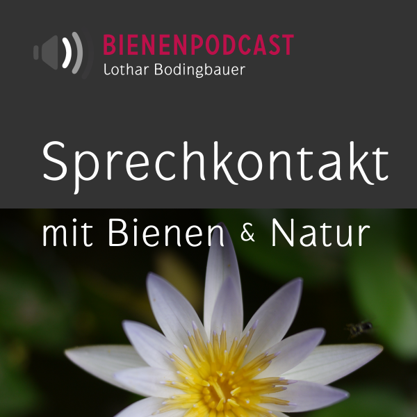 Bienengespräche – Bienenpodcast (mp3)