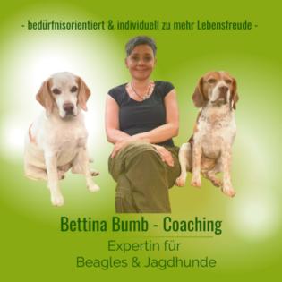 Bettina Bumb Coach für Menschen mit Beagles & Jagd(familien)hunden