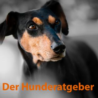 Der Hunderatgeber-alles Rund um den Hund