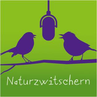Naturzwitschern